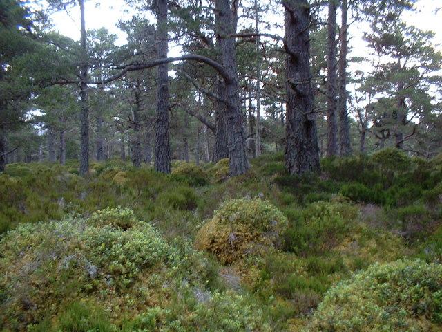 Track through woods to Loch Morlich