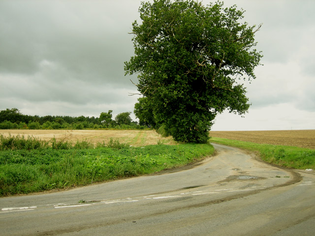 The other side of the junction - and a twin oak