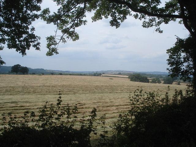 Late hay crop near Daubies Farm
