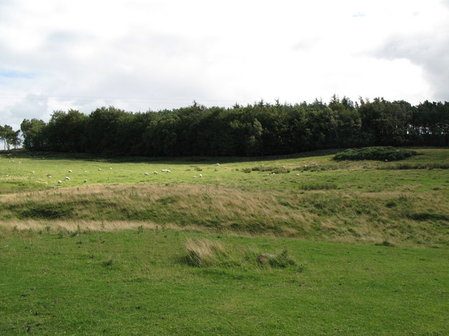 Rough pastures and woodland near Hill Head