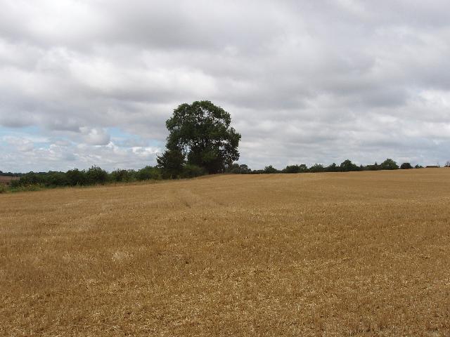 Harvested wheat field near Higham Park Farm