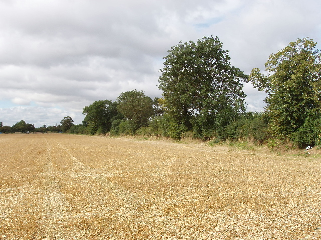Roadside hedge and harvested wheat field