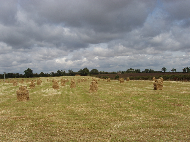 Stacks of rectangular bales on harvested field