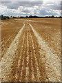 SP9462 : Stubble left after wheat harvest, Podington by David Hawgood