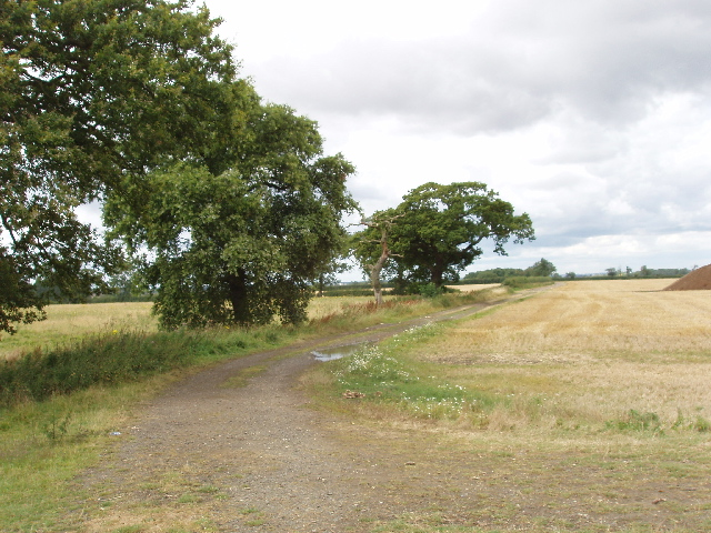 Oak trees by track to Glebe Farm