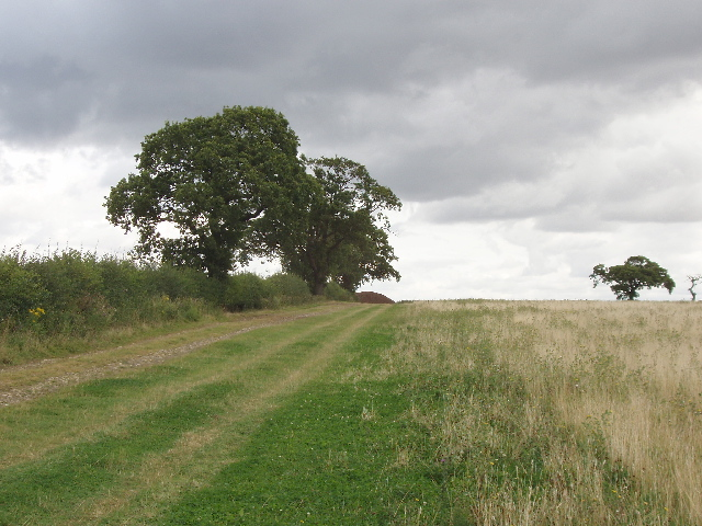Grass field with hawthorn hedge and oak trees