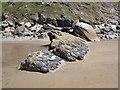 SX4050 : Ninney Rocks (1) by Rob Farrow