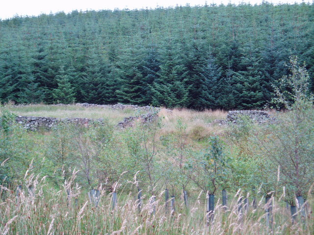 Old Sheepfold, Manquhill Forest.