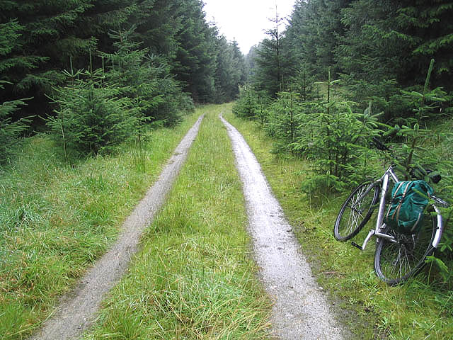 Forestry in Wellcleuch Plantation