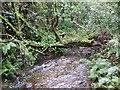 SX2873 : Woodland stream near North Darley by Rob Farrow