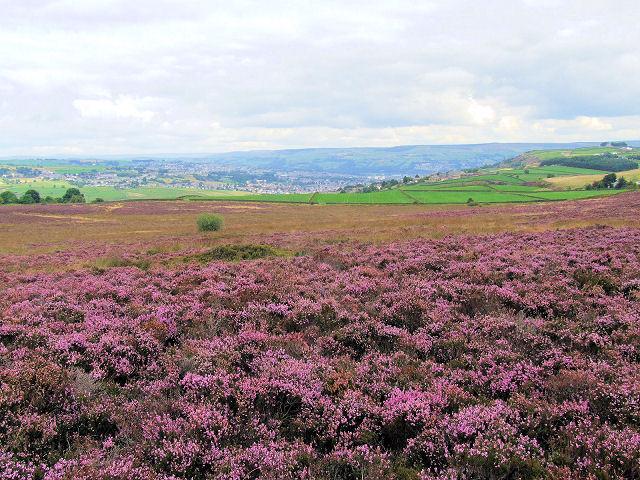 Brow Moor