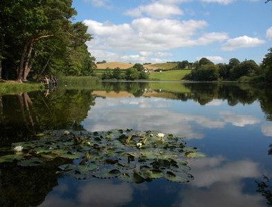 SO0893 : Lilies in Fachwen Pool by Philip Halling