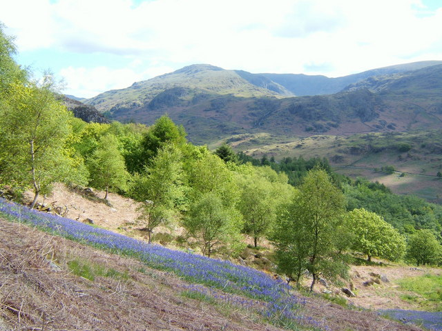 Mixed fellside with bluebells