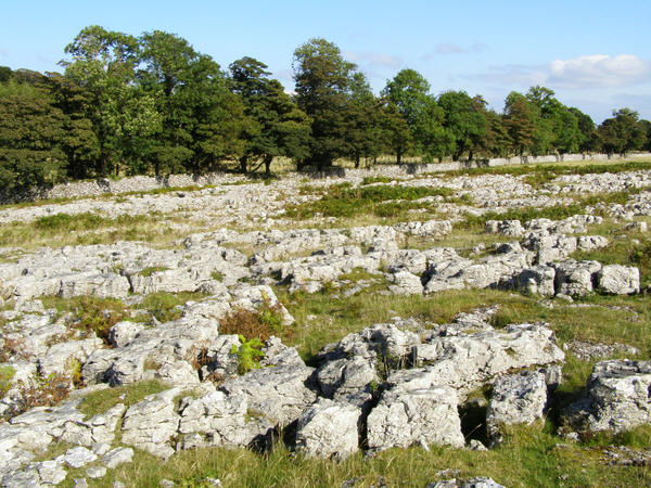 Limestone Pavement on Knipe Moor