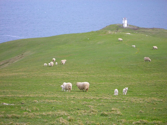 Sheep near Baa Taing