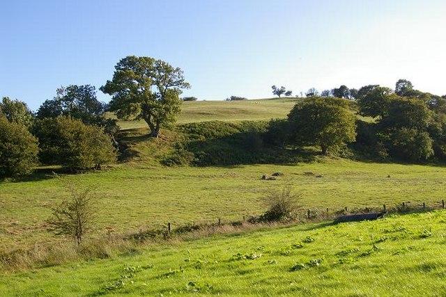 Hillside at Pen y Garth