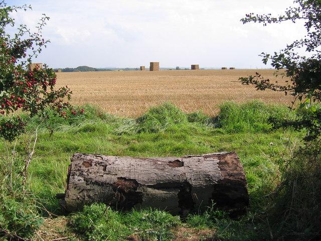 Lincolnshire Wolds Farmland