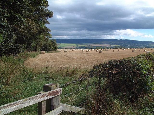 Near Mile End Farm