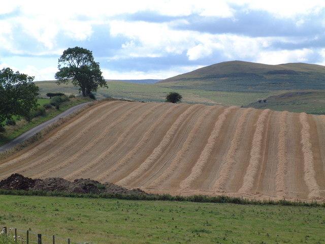 Field near Mile Moor