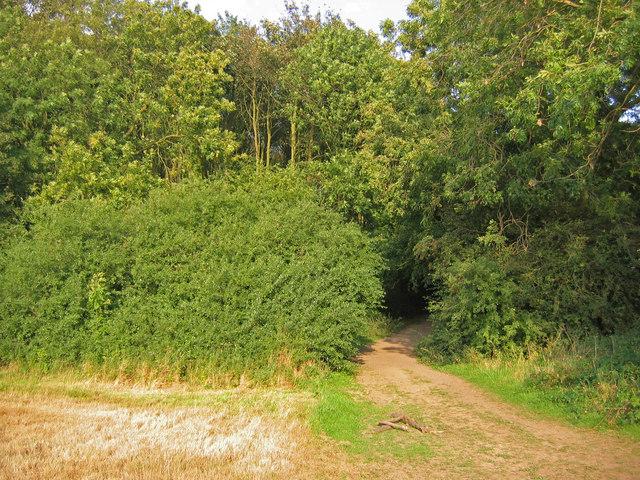 Bridleway, Irby Holmes Wood