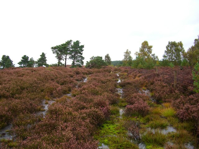 Wet & rough track across Lazonby Fell