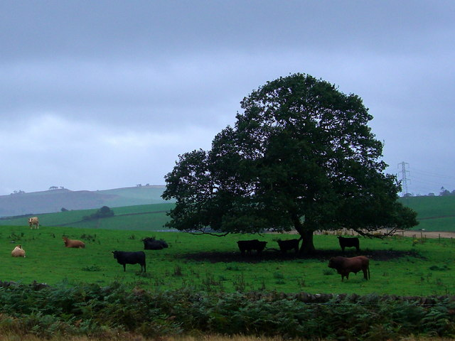 Fine Oak in farmland