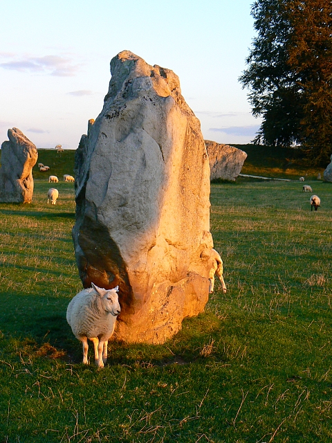 Sheep, shadows and standing stones, Avebury Circle, Wiltshire