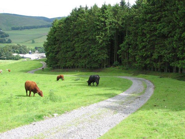 Farm track, Darnhall Mains
