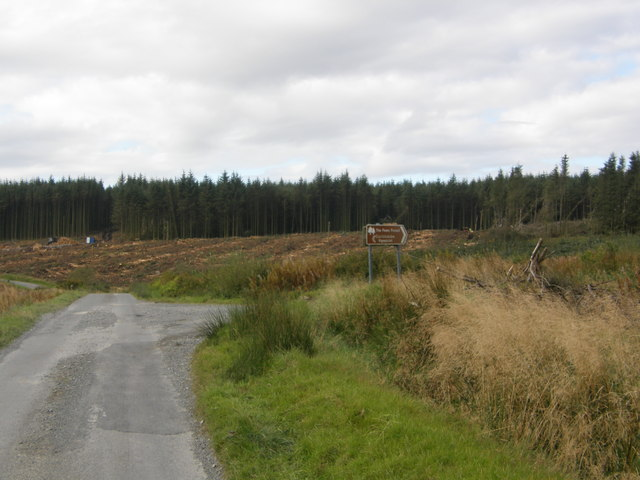 Ongoing forestry operation