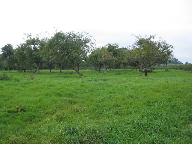 Orchard off Teapot Lane
