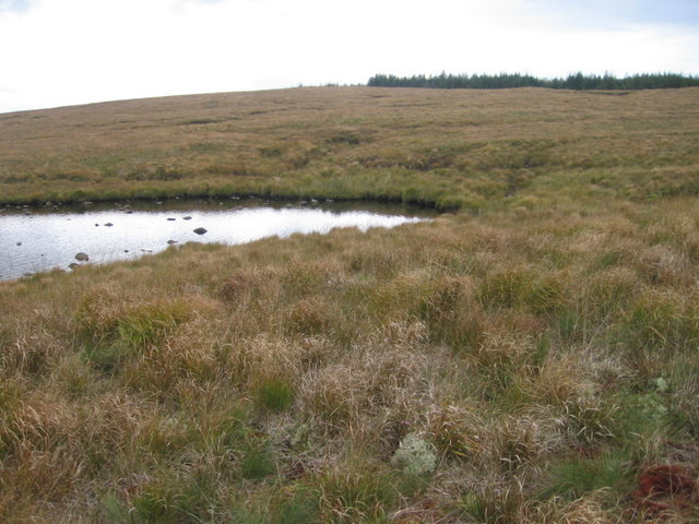 Edge of Loch Nuis towards forest