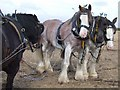 SK6842 : Flintham Ploughing Match, Newton by Dave Hitchborne