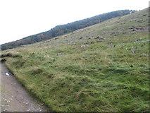 NR9937 : Binnien Wood from Glen Rosa by Chris Wimbush