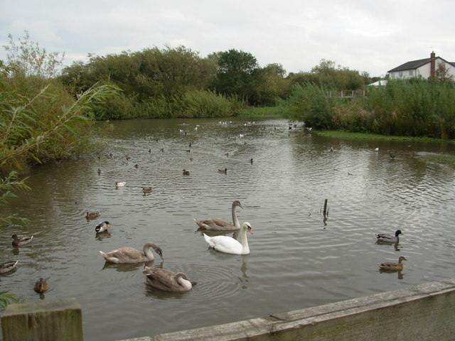 Harrington Pond