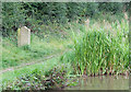 SJ8459 : Milestone and Reeds, Macclesfield Canal, Cheshire by Roger  Kidd