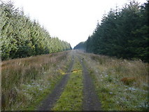 NS5113 : Forestry Road by david johnston