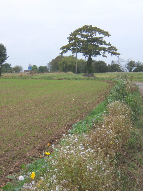 Laneside field margin with lots of seed heads