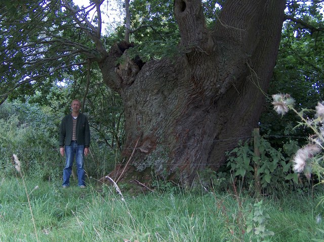 Old oak tree near Terling Ford, Essex
