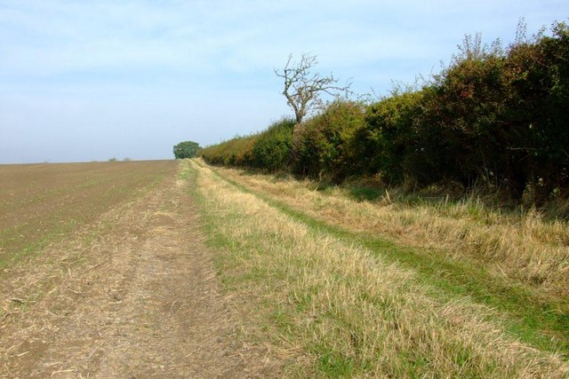 Track and Hedgerow