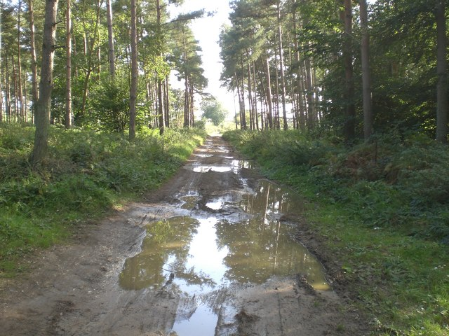 Track heading south out of Congham Heath Wood