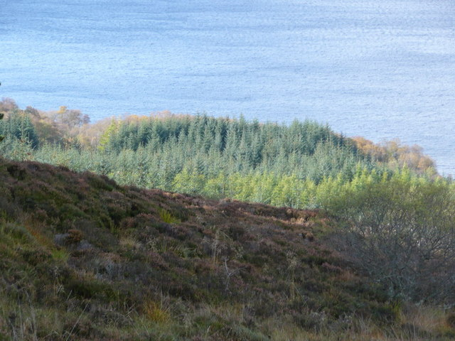Trees at the edge of the loch
