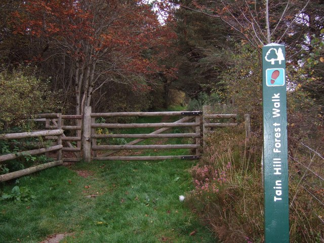 Tain Hill Forest Walk