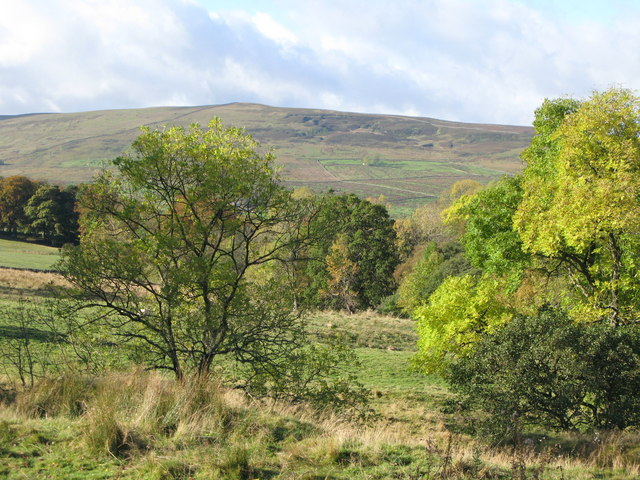 Pastures and woodland near Blackcleugh