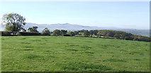 SO1430 : Pasture west of Heol-y-Cefn by Jonathan Billinger