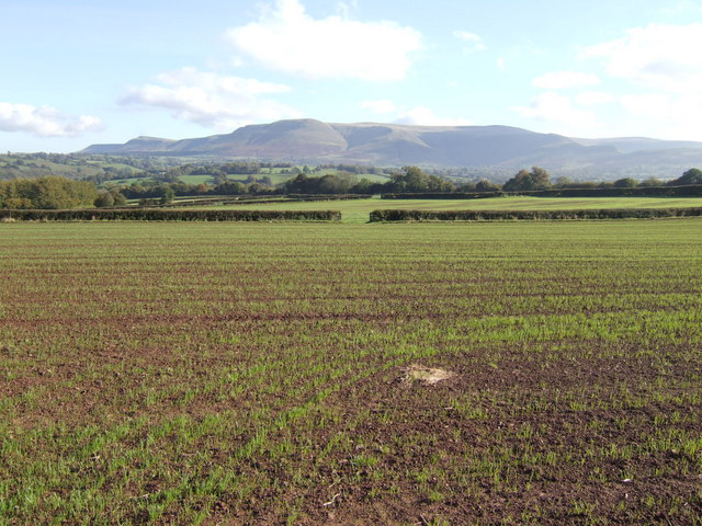 Arable fields and the Black Mountains
