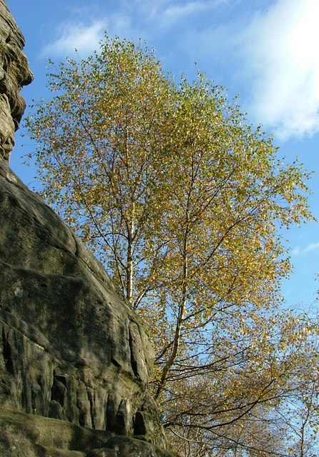 Trees at Froggatt Edge