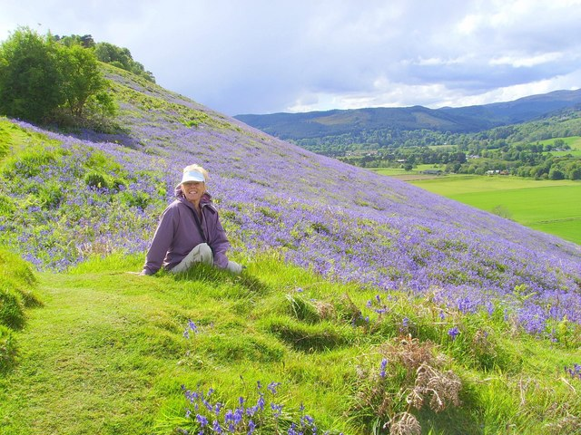 Bluebell time on Knock Farrel