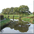 SJ9051 : Caldon Canal, below Stockton Brook, Staffordshire by Roger  Kidd