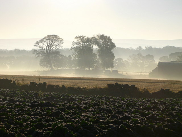 Morning mist at Abbeymill Farm, Haddington