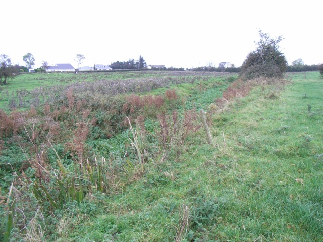 Ditch at Iskaroon, Near Dunderry, Co. Meath